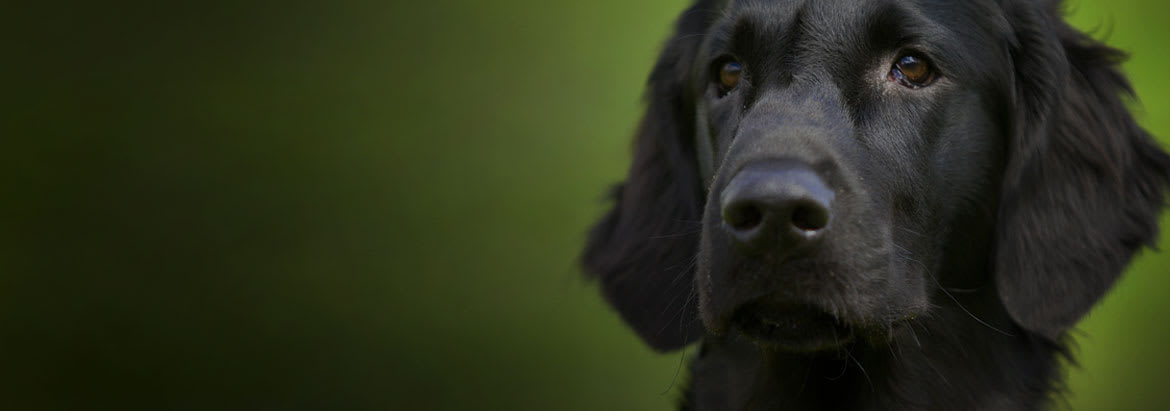Insurance For Dogs >> 8 Companies Offering Pet Insurance For Older Dogs Bought