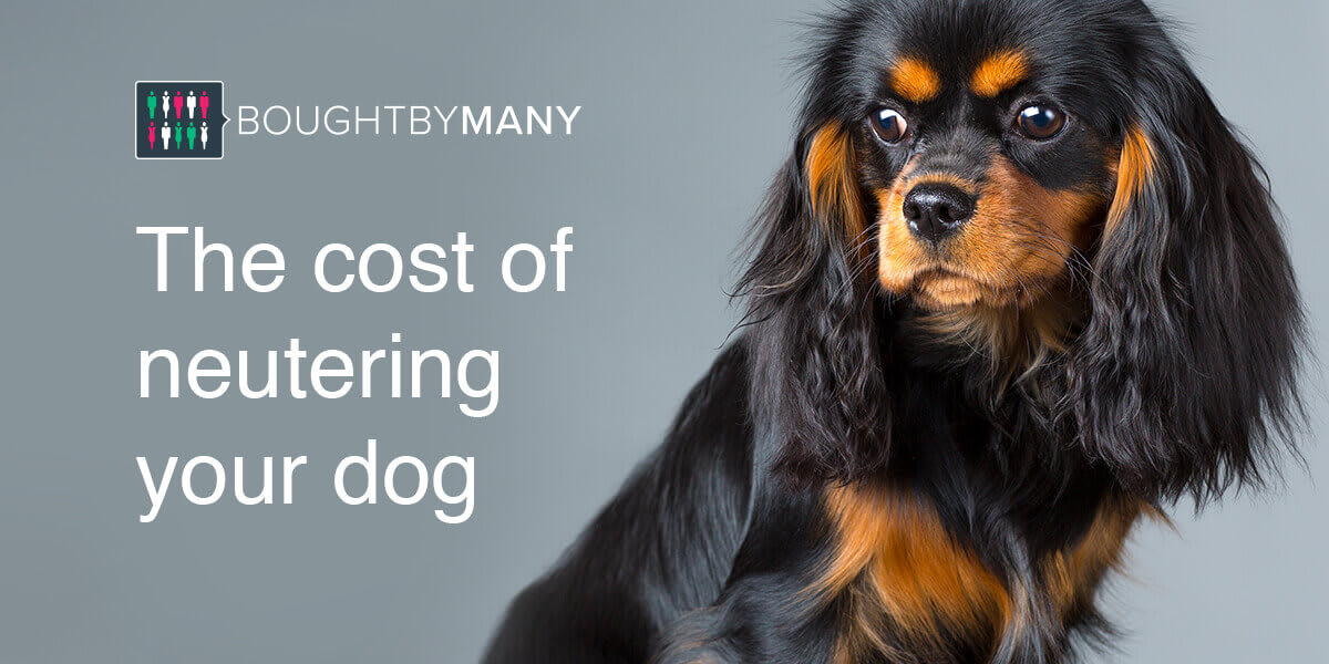 How Much Does It Cost To Neuter A Dog Bought By Many