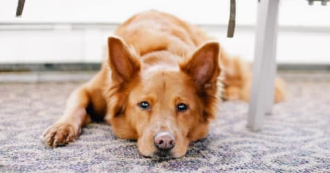 Disappointed With Your Pet Insurance Renewal Quote Bought By Many