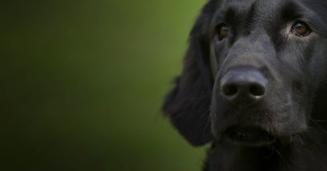 8 companies offering pet insurance for older dogs - Bought ...