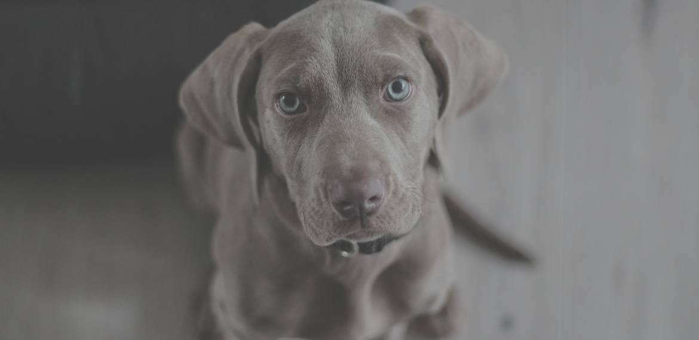 Dog insurance - Bought By Many