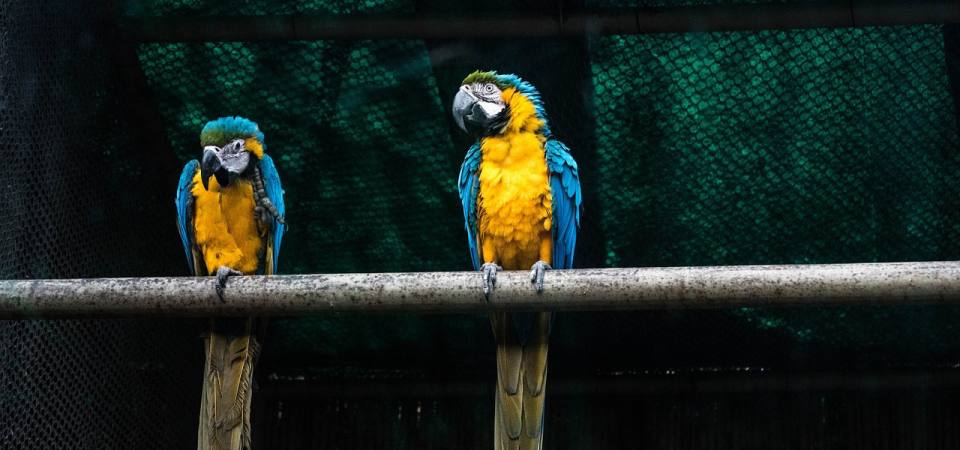 How much does it cost to keep a Parrot? - ExoticDirect
