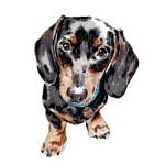 Personalised pet portrait, £105.00