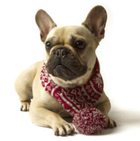 Scarf for dogs