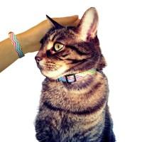 Chatty cat collar