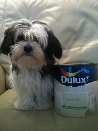 A dog next to a paint tin
