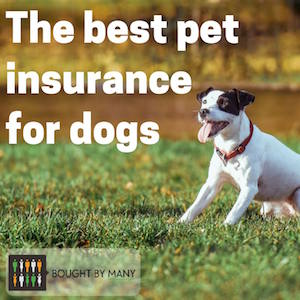 the best pet insurance for dogs