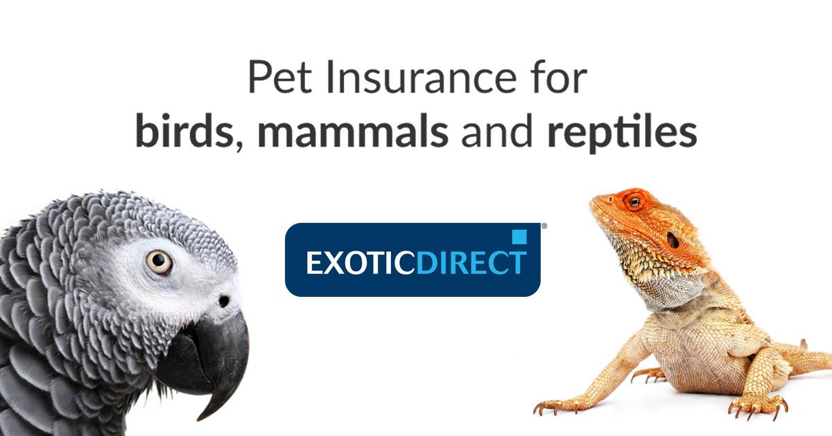 www.exoticdirect.co.uk