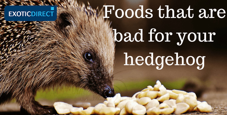 Hedgehog Diet Cat Food
