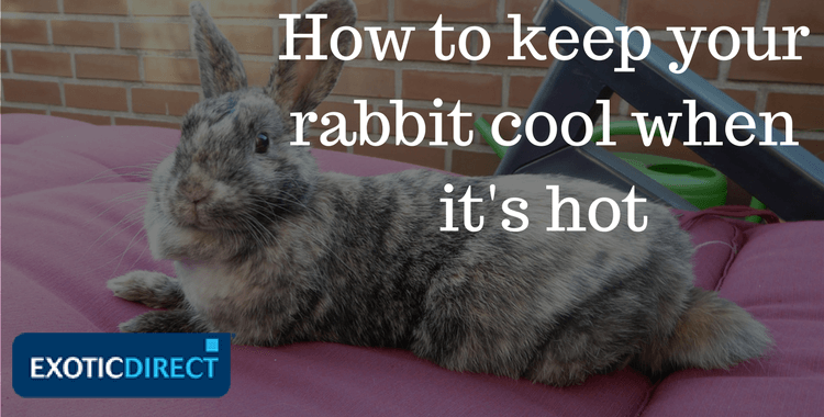 Can Pet Rabbits Live Outside How To Keep Your Bunny