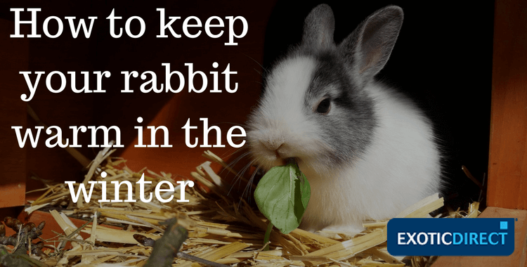 Can pet rabbits live outside how to keep your bunny - What temperature to keep house in winter ...
