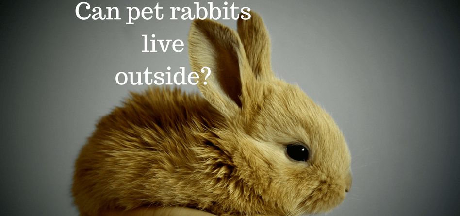 Can Pet Rabbits Live Outside How To Keep Your Bunny Safe Outside