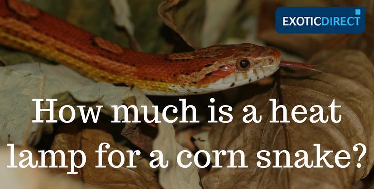 corn snake & Corn snake setup costs - ExoticDirect