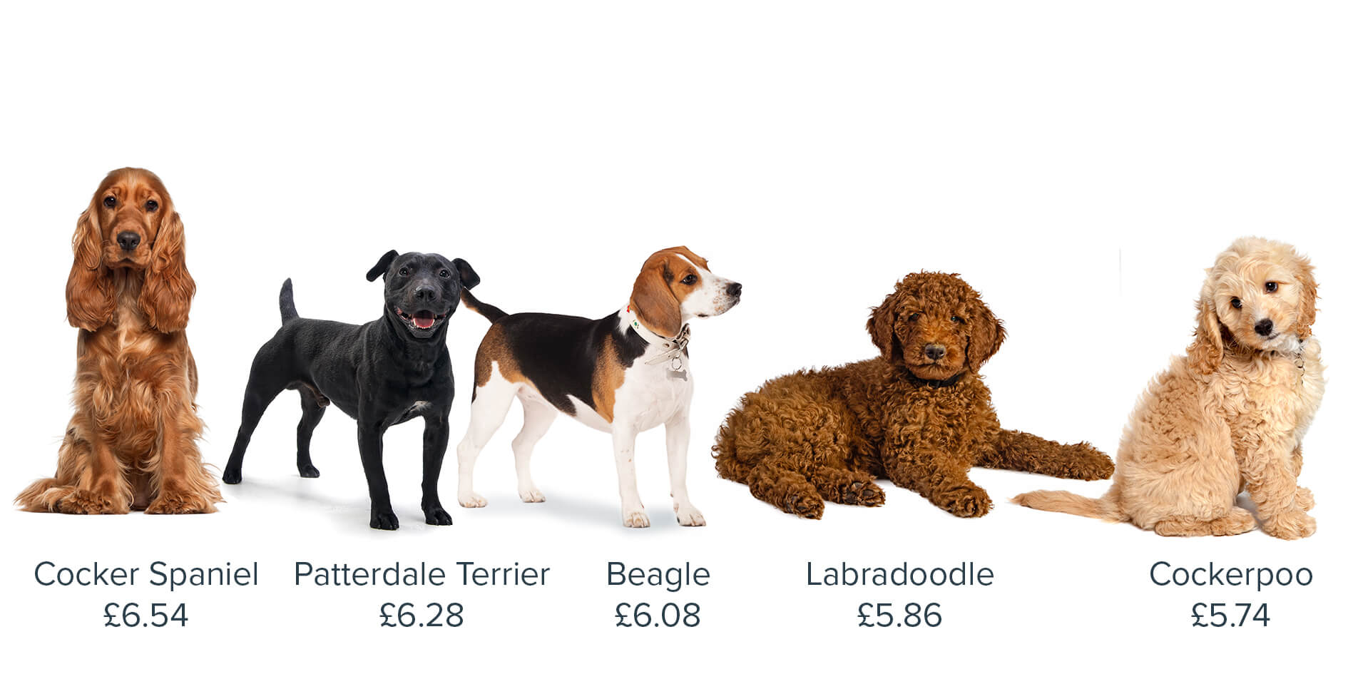 The Five Cheapest And Most Expensive Dog Breeds To Insure Bought By Many