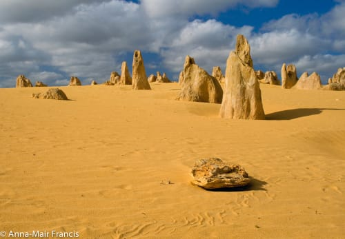 Pinnacles, Sea and Dune scapes, Bush reserves and Sunset Day Tour