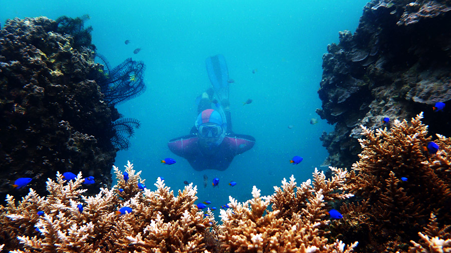 pulau tegal diving