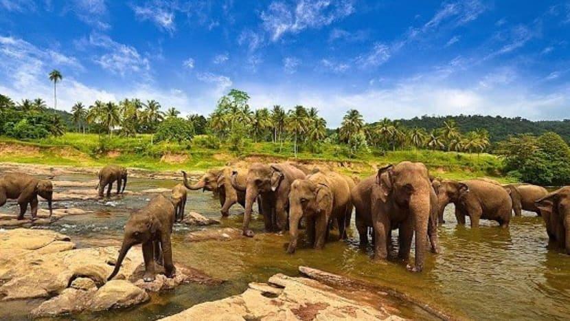 Wisata Lampung – Taman Nasional Way Kambas