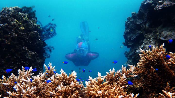 pulau tegal diving
