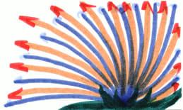 cards/flower-fanning