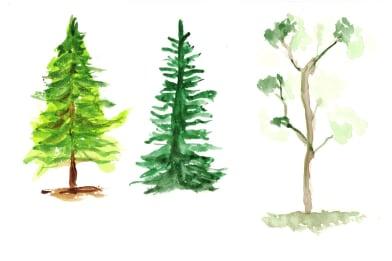 Three Trees (study)