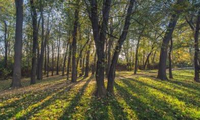 Grove on the Oostanaula