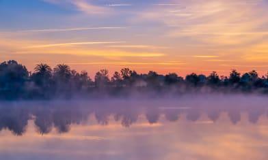 Morning Reflection in Ocala