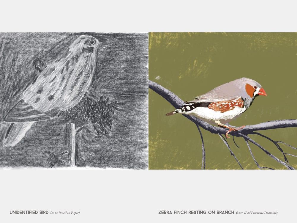 Unidentified bird (2002 Pencil on Paper) & Zebra Finch Resting On Branch (2020 iPad Procreate Drawing)