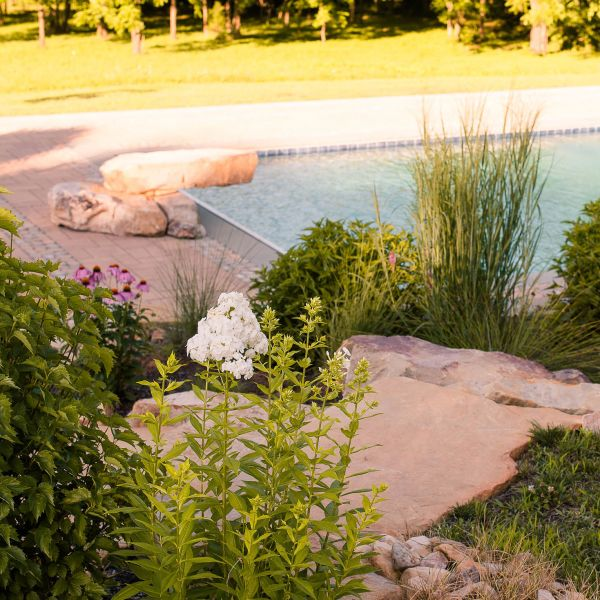 Native landscape with gunite pool in the background