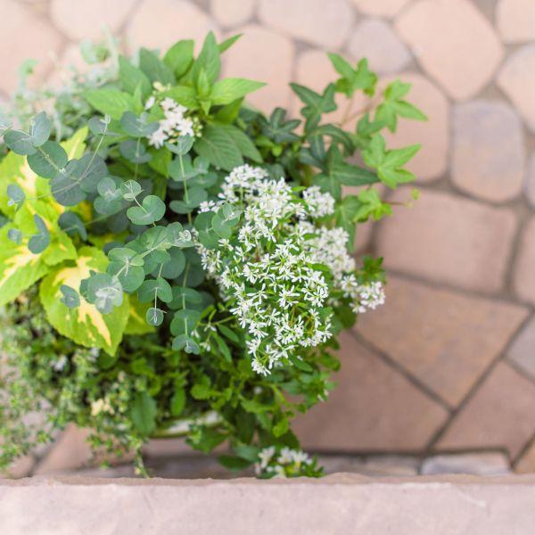 potted plant on a techo-bloc paver patio