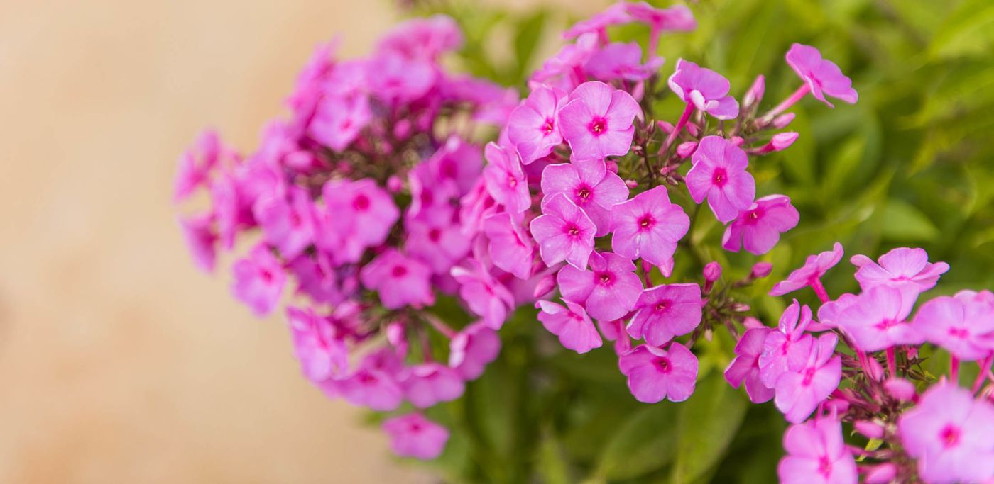 Benefits of Landscaping with Native Plants