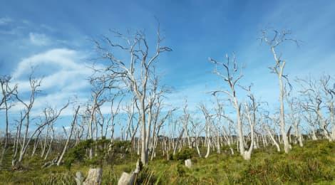 Jirka mezi klokany: Austrálie je o dva levely výš než cokoliv