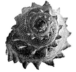tjuvholmen-sjmagasin-symbol-skjell