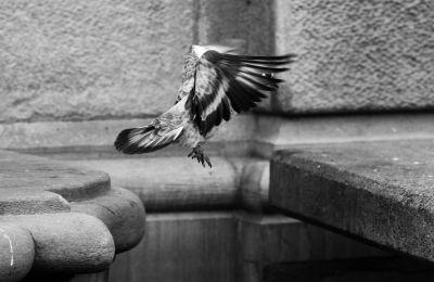 Photo by Brenda Veldtman, Street Photography, Travel