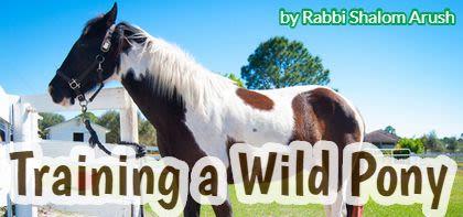 Training a Wild Pony