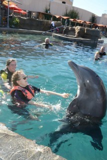 <h5>Dolphinaris Arizona</h5><p> Dolphinaris Arizona - Overall</p>