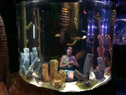 <h5>Fish 6</h5>