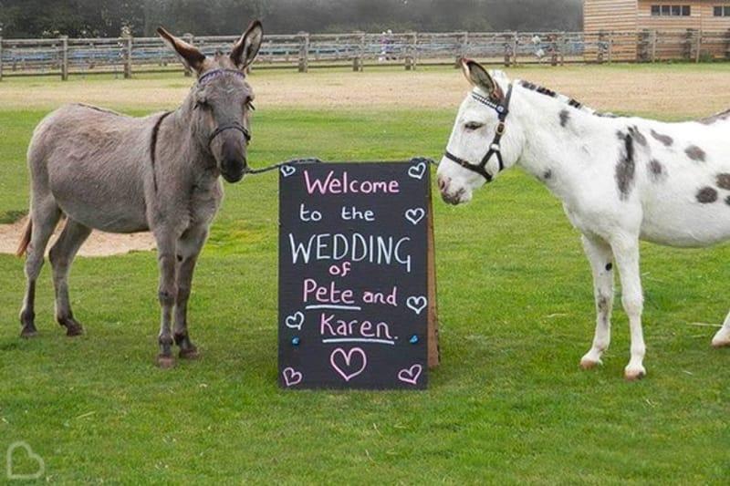 Bridebook.co.uk The Donkey Sanctuary