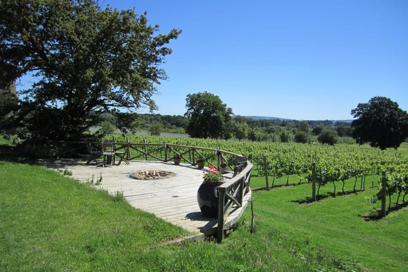 Nutbourne Vineyards on a sunny day