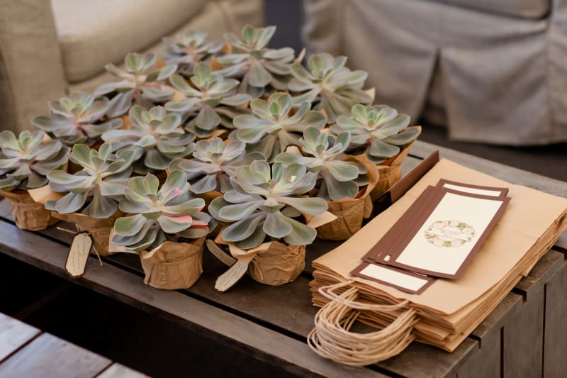 Bridebook.co.uk Wedding Favours Succulents