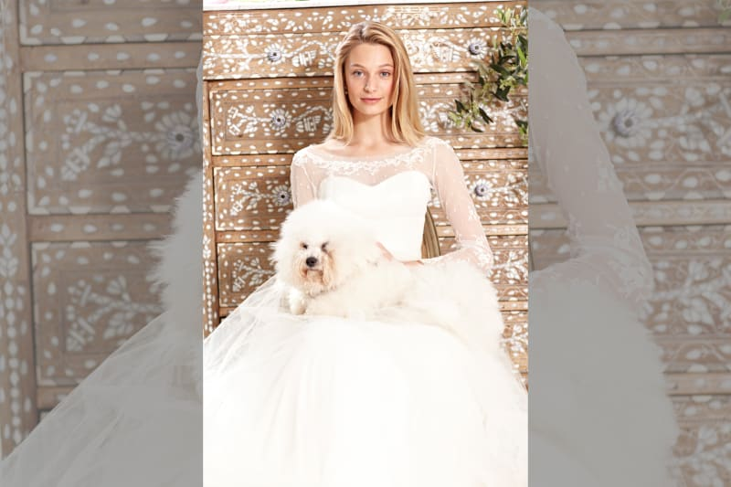 bridebook.co.uk phillipa lepley dress on model in front of cabinet with dog