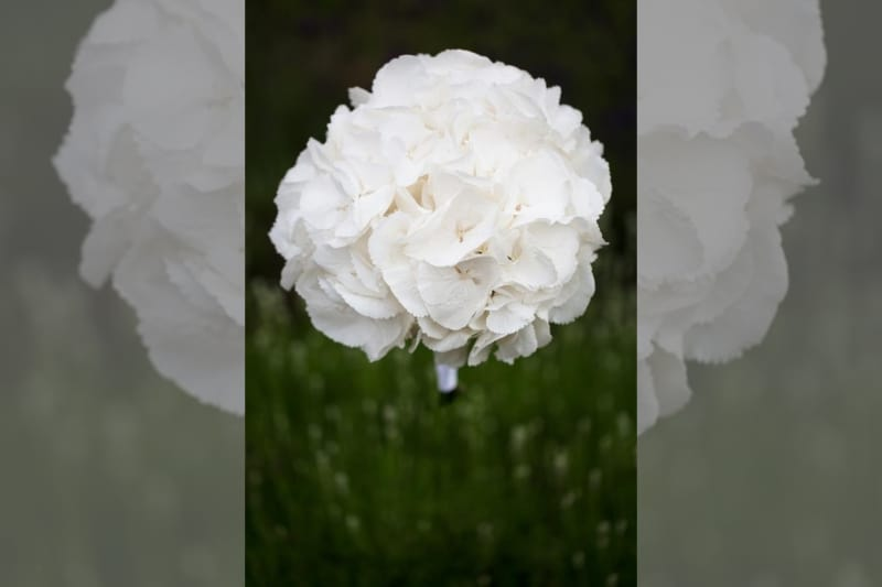 Bridebook.co.uk- composite flower bouquet white