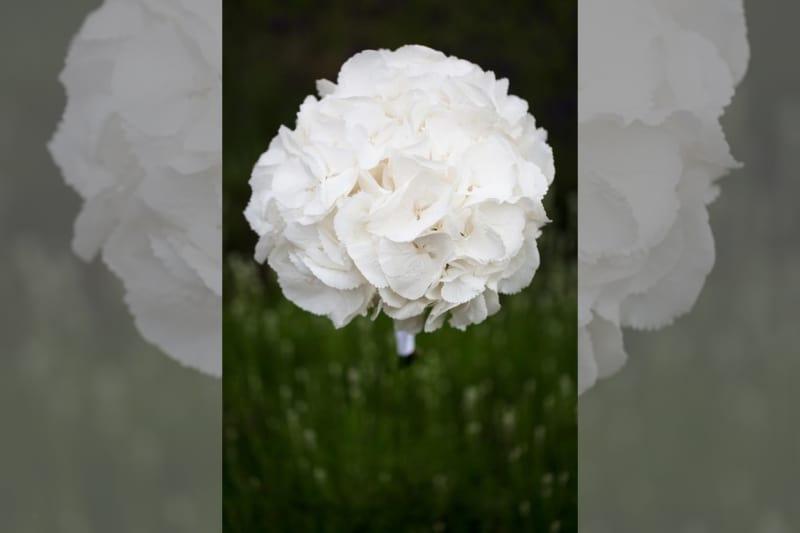 Bridebook.co.uk- composite flower bouquet white
