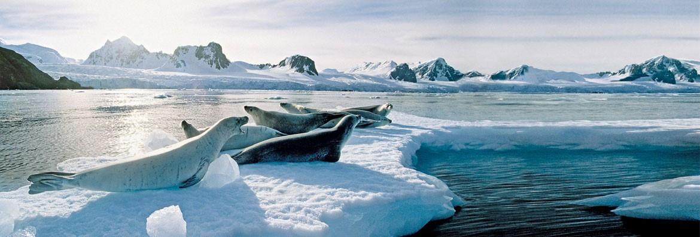 Bridebook.co.uk- seals lying on ice