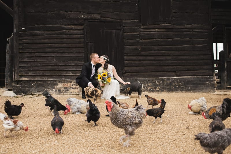 Bride and groom kissing surrounded by chickens and pigs.