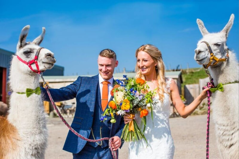 The couple stand outside with two white llamas.