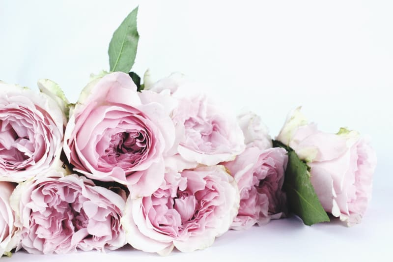 Pink flower roses 4th Wedding Anniversary gift