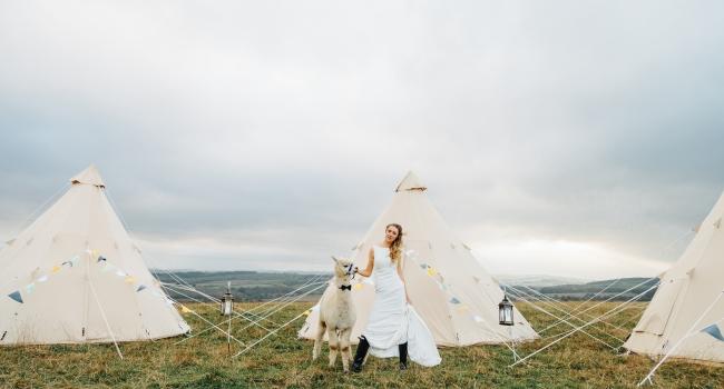 Bride poses with alpaca amidst the tipis at New Close Farm. A garden wedding venue in Sacriston.