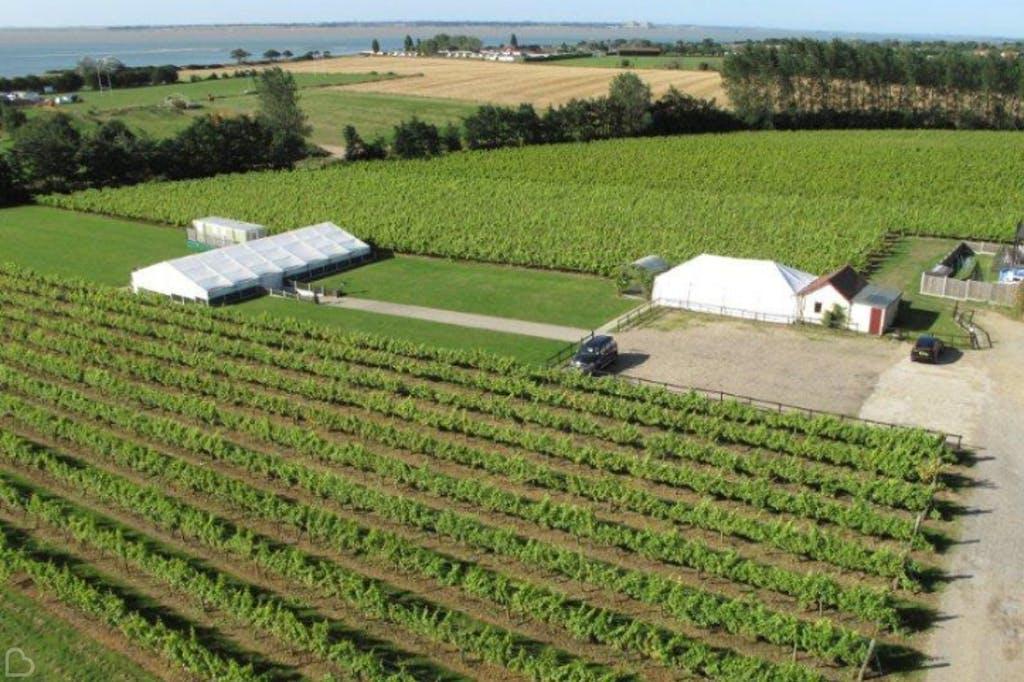 Merse Island Vineyard