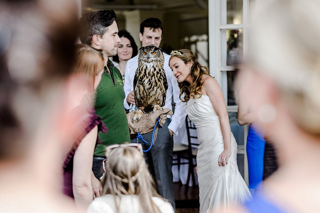 Bride and owl at ZSL zoo in London.