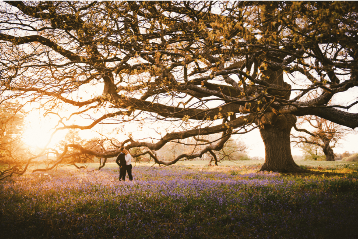 Married couple standing in lavender field next to beautiful tree at sunset